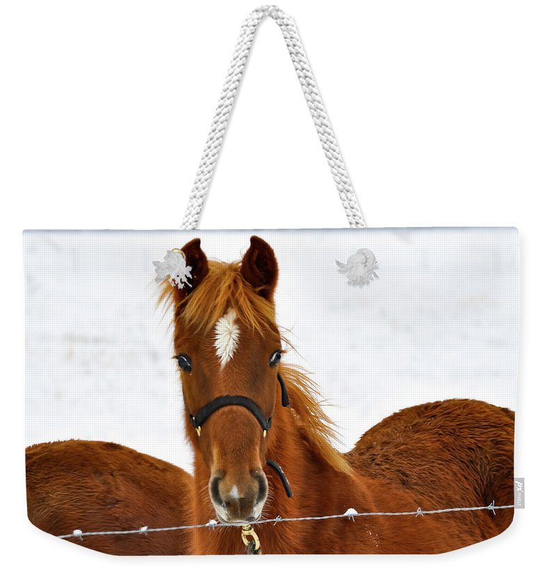 Horse Weekender Tote Bag featuring the photograph Diamond by Michelle Rollins
