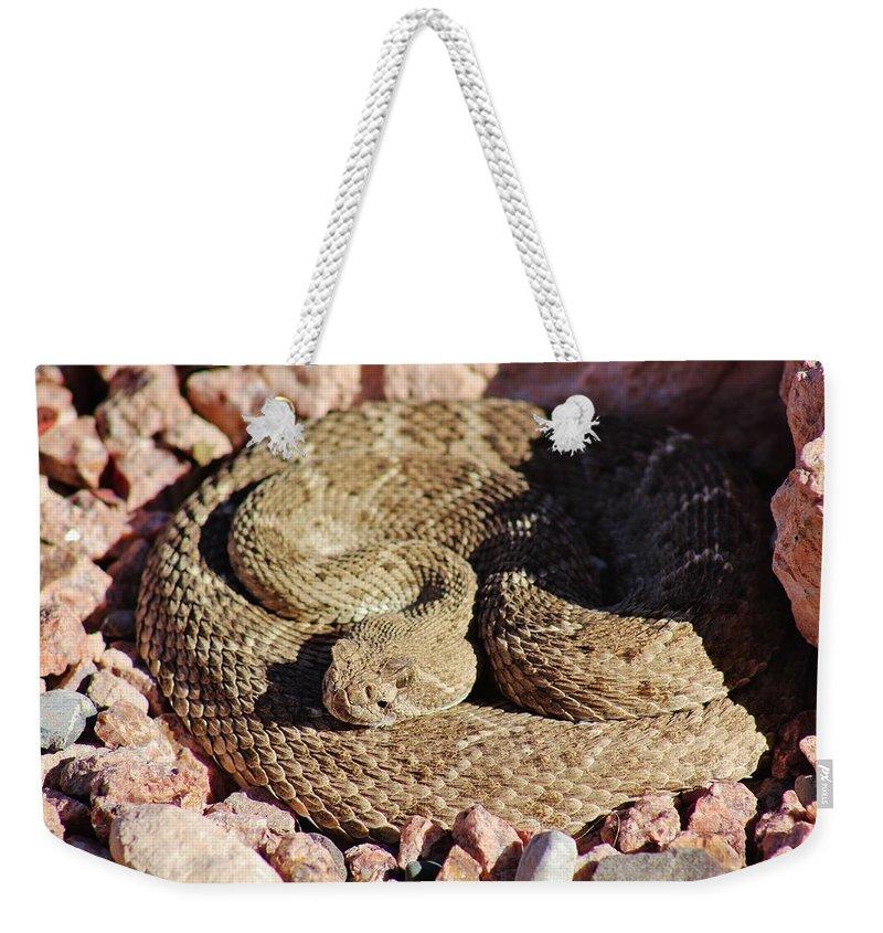 Wild Weekender Tote Bag featuring the photograph Diamondback Rattlesnake 062414f by Edward Dobosh