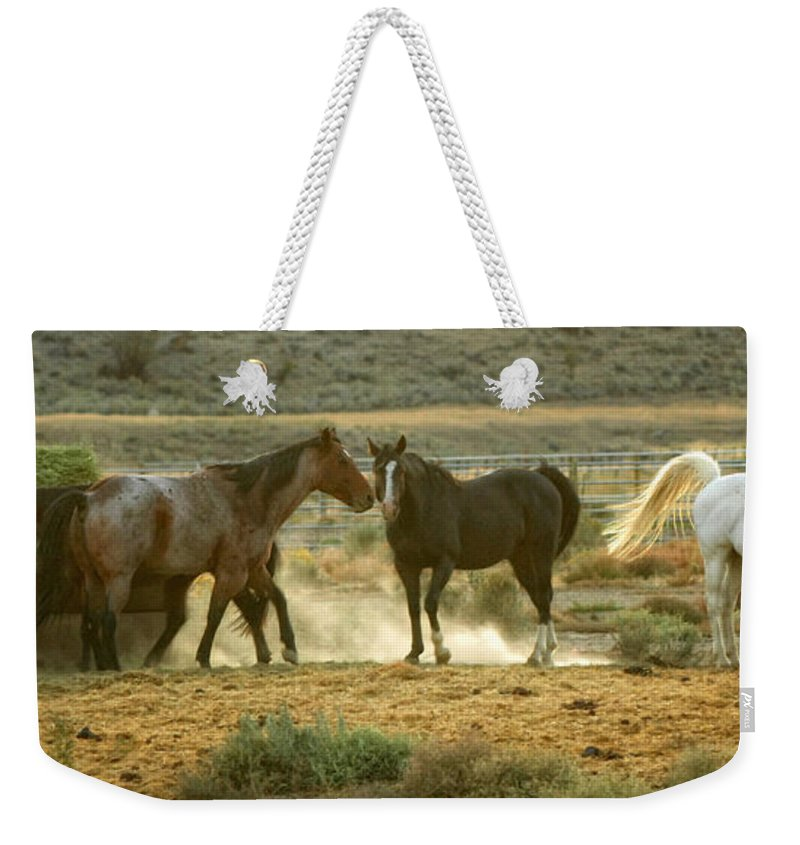 Horses Weekender Tote Bag featuring the photograph Dinner Time by Donna Blackhall