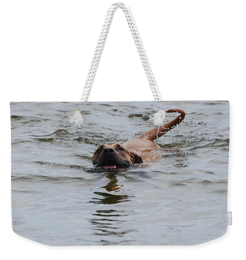 Swimming Weekender Tote Bag featuring the photograph Dirty Water Dog by Rob Hans