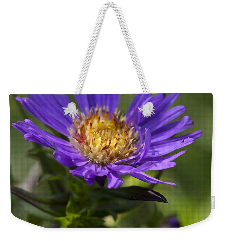 Flower Weekender Tote Bag featuring the photograph Display Of Softness by Deborah Benoit