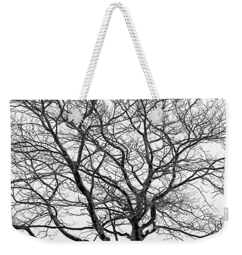 Tree Weekender Tote Bag featuring the photograph Distance Between Us by Marlon Mullon