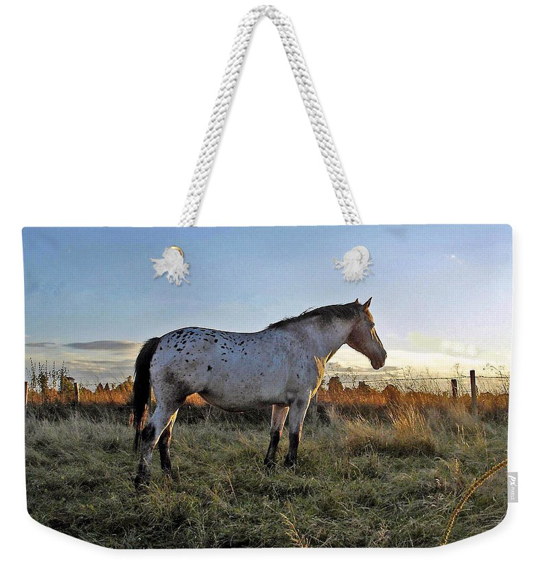 Appaloosa Weekender Tote Bag featuring the photograph Distant Thoughts by Susan Baker