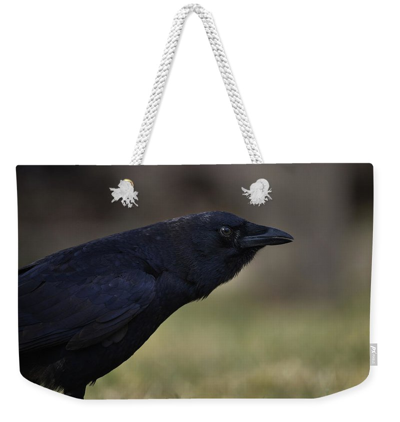 Crow - Rae Ann M. Garrett - Photography - Images Of Crows - Corvids- Mother Crow- For People Who Love Crows - Crow Lovers - International Known Artist - Professional Artists- Weekender Tote Bag featuring the photograph Distinctly by Rae Ann M Garrett
