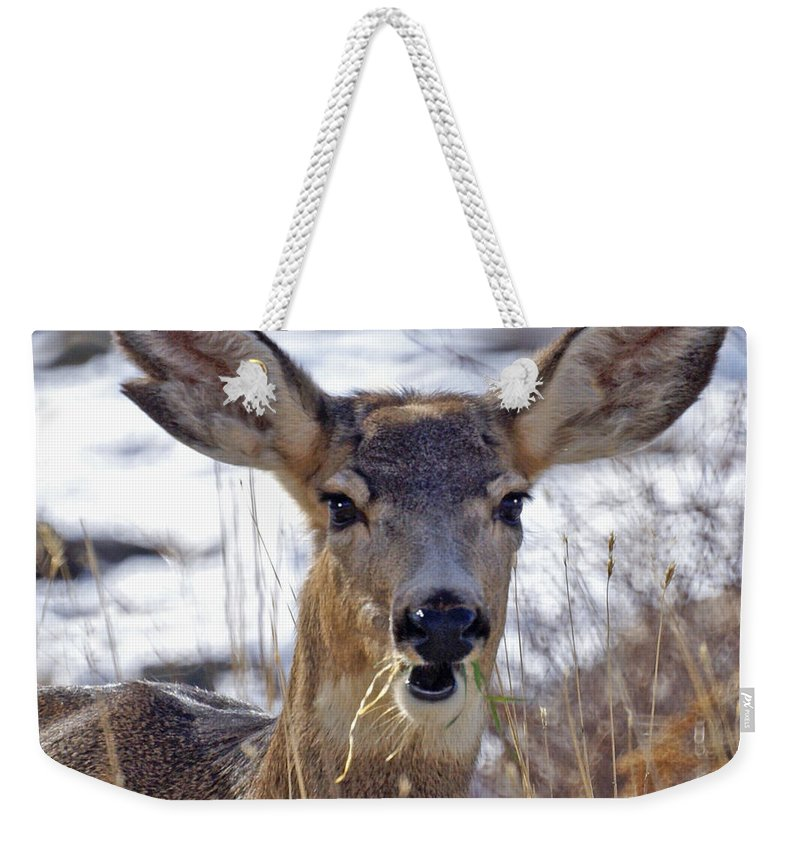 Doe Weekender Tote Bag featuring the photograph Doe by Heather Coen
