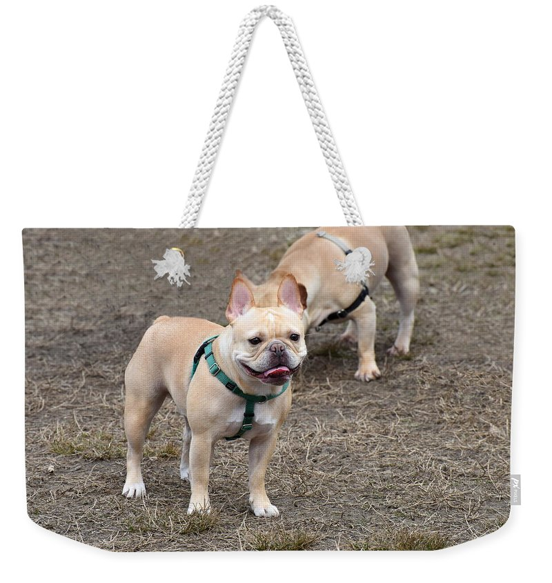 Frenchie Weekender Tote Bag featuring the photograph Dog 381 by Joyce StJames