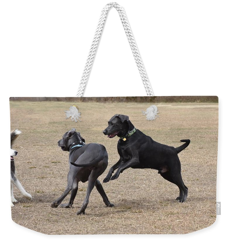 Dogs Weekender Tote Bag featuring the photograph Dog 382 by Joyce StJames
