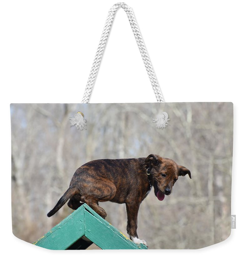 Dog Weekender Tote Bag featuring the photograph Dog 388 by Joyce StJames