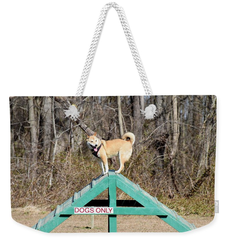 Dog Weekender Tote Bag featuring the photograph Dog 389 by Joyce StJames