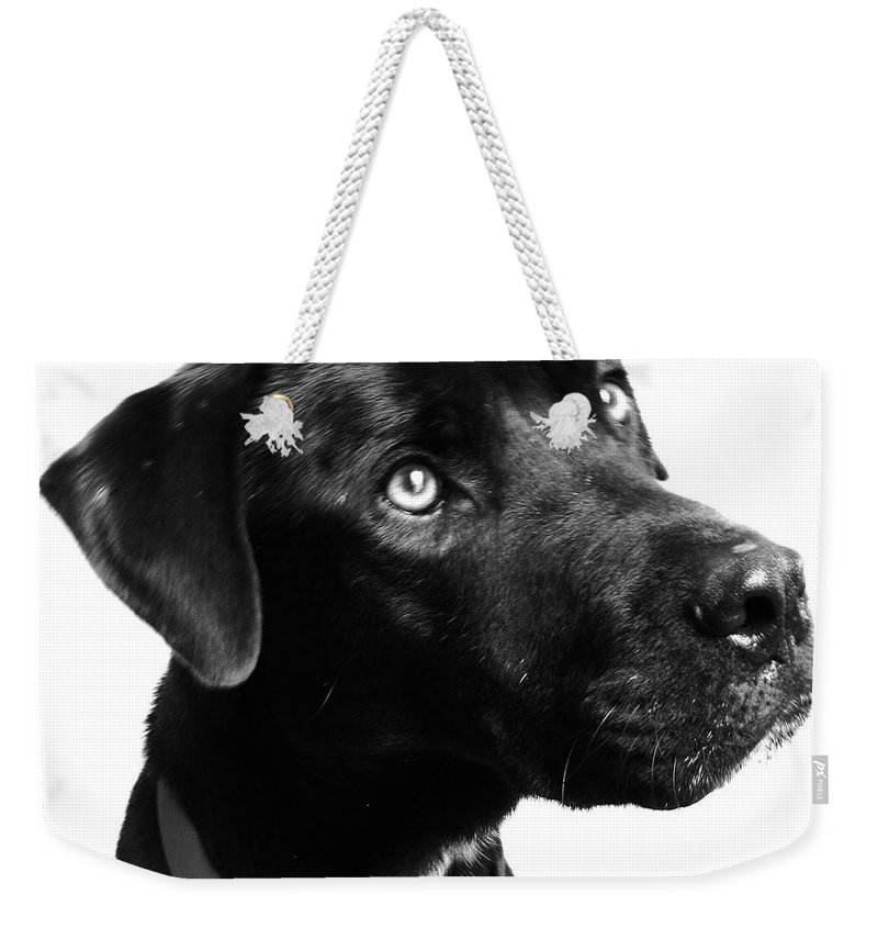 Dogs Weekender Tote Bag featuring the photograph Dog by Amanda Barcon