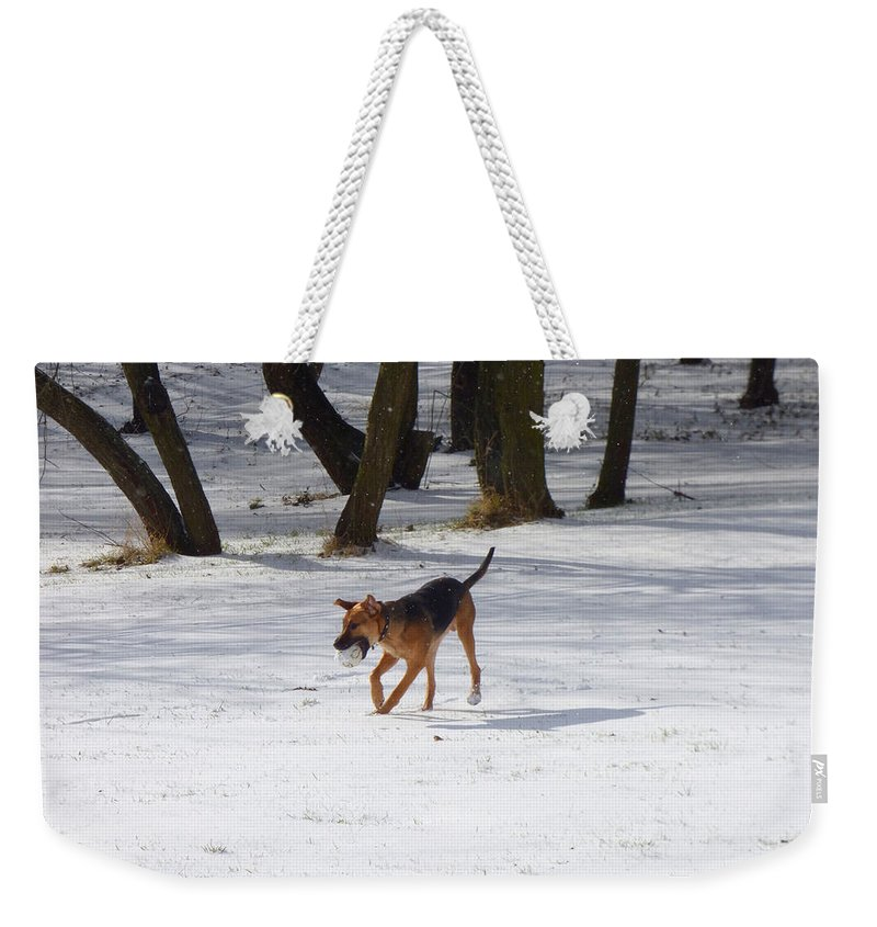 Dog Weekender Tote Bag featuring the photograph Dog And Winter by Miroslav Nemecek