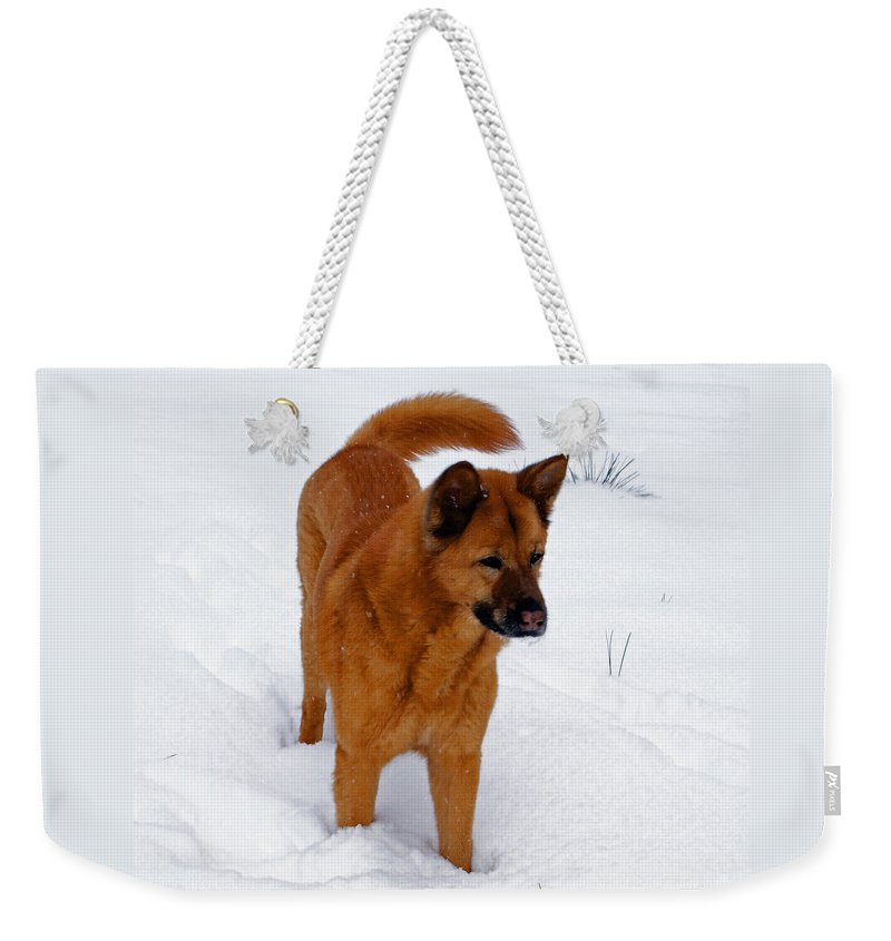 Snow Weekender Tote Bag featuring the photograph Dog Days Of Winter by Jean Haynes