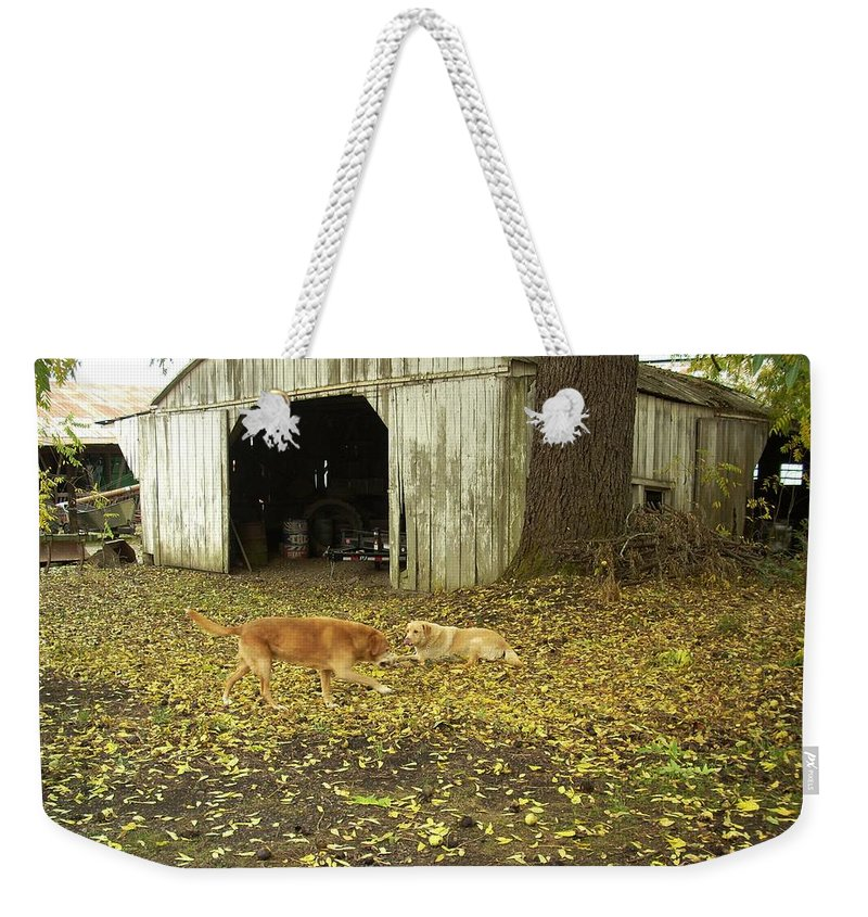 Dog Weekender Tote Bag featuring the photograph Dog Day's by Sara Stevenson