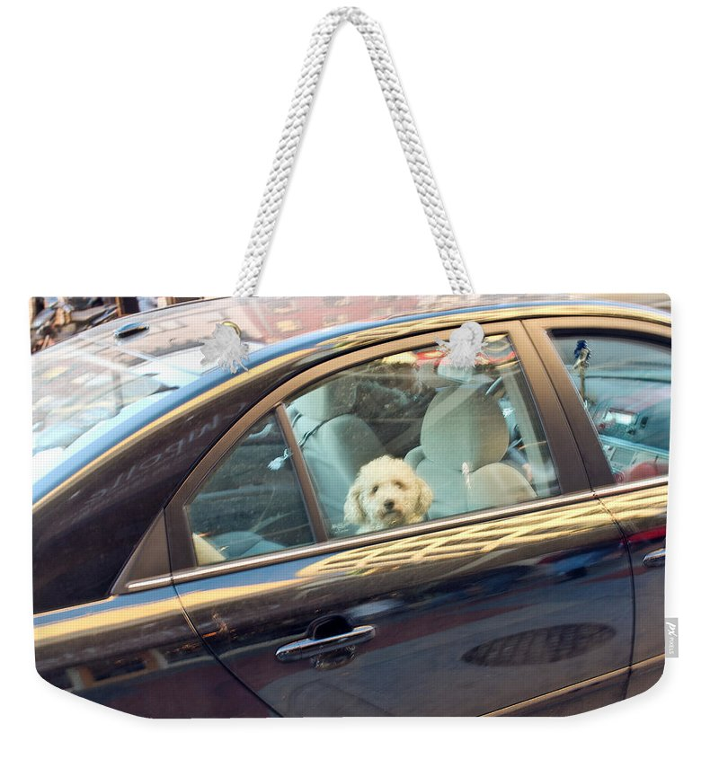 Dog Weekender Tote Bag featuring the photograph Dog On The Move by Julie Niemela
