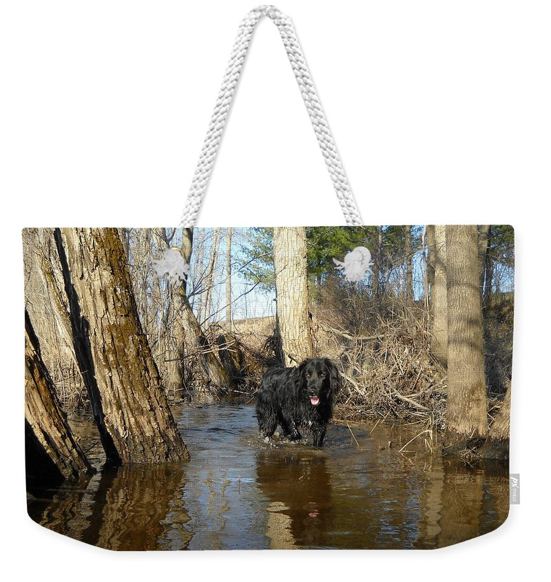 Dog Weekender Tote Bag featuring the photograph Dog Wading In Swollen River by Kent Lorentzen