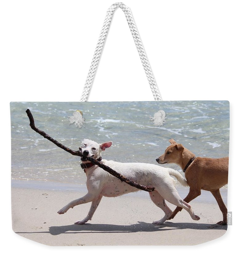 Beach Weekender Tote Bag featuring the photograph Dogs On The Beach by FL collection
