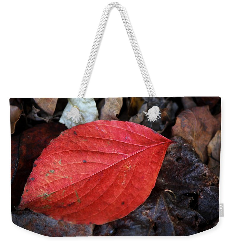 Dogwood Weekender Tote Bag featuring the photograph Dogwood Leaf by Teresa Mucha