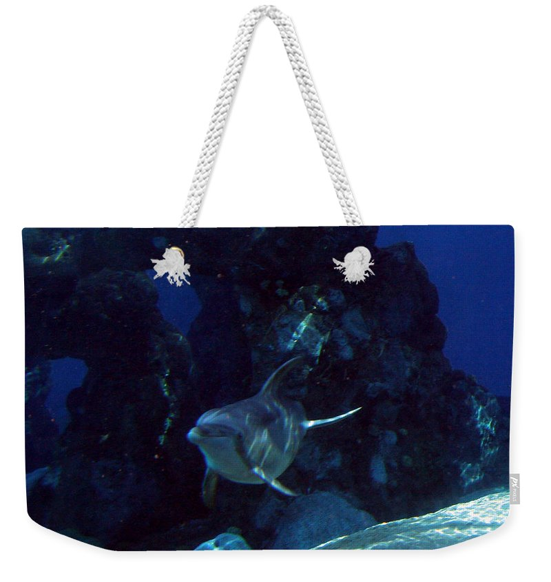 Dolphin Fish Aquatic Life Water Aquarium Sea Sandy Shore Rock Reef Weekender Tote Bag featuring the photograph Dolphin by Andrea Lawrence