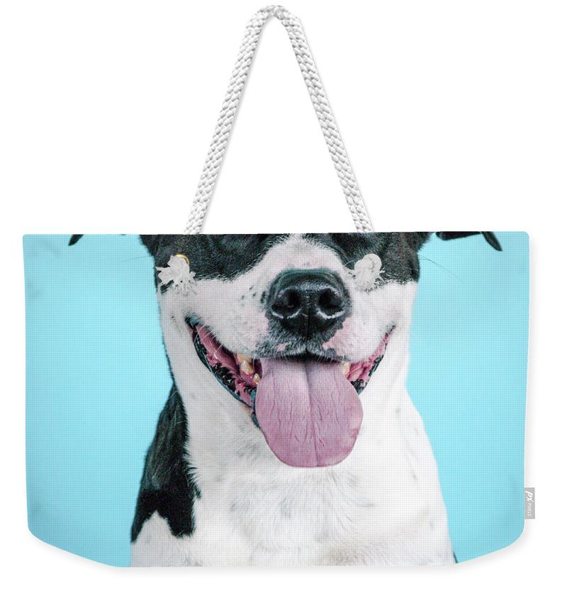 Dogs Weekender Tote Bag featuring the photograph Domino 1 by Pit Bull Headshots by Headshots Melrose