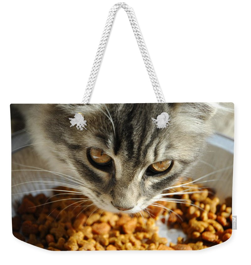 Cat Weekender Tote Bag featuring the photograph Don't Even Think About It by Donna Blackhall