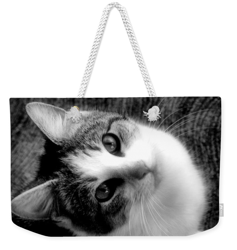 Cat Weekender Tote Bag featuring the photograph Don't Ever Leave by Gaby Swanson