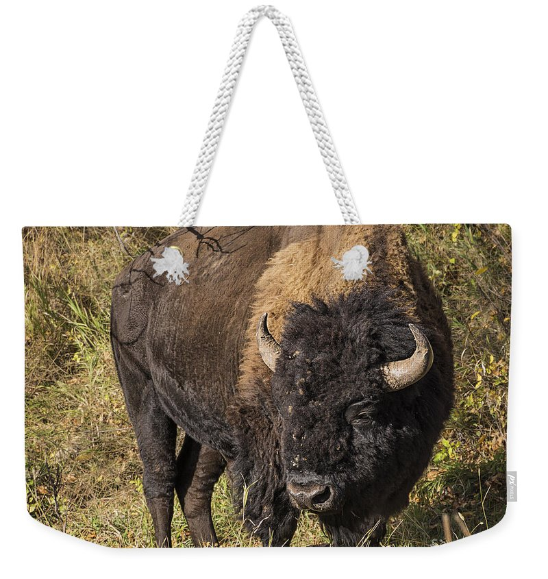 Don't Mess With This Bison Weekender Tote Bag featuring the photograph Don't Mess With This Bison by Priscilla Burgers