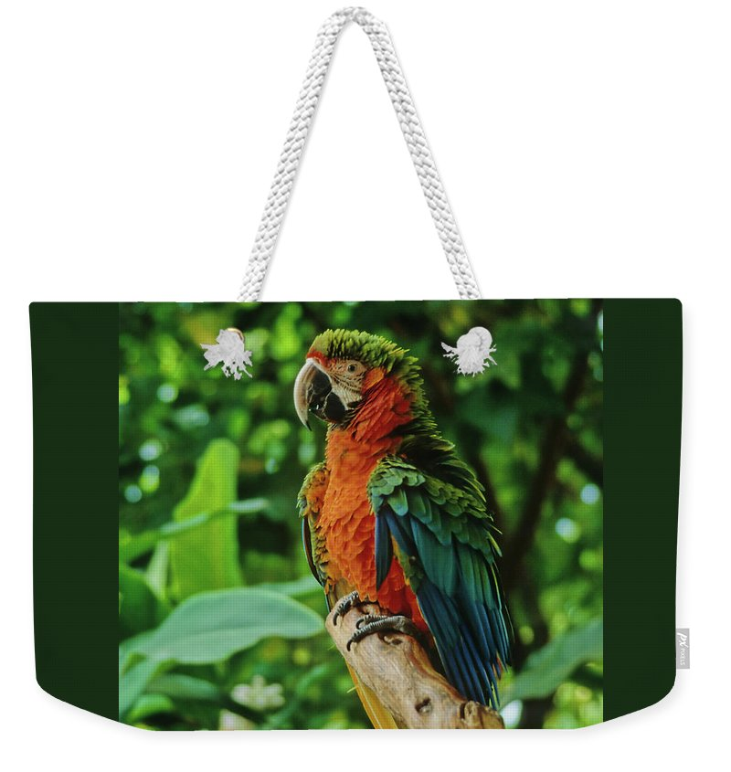 Parrot Weekender Tote Bag featuring the photograph Don't Ruffle My Feathers by Marie Hicks