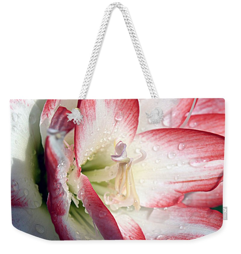 Double Amaryllis Weekender Tote Bag featuring the photograph Double Amaryllis by Bob Johnson