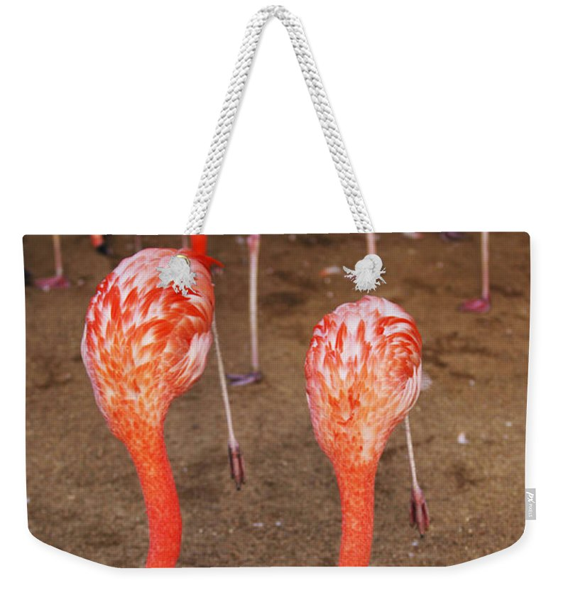 Zoo Weekender Tote Bag featuring the photograph Double Dip by Jill Reger