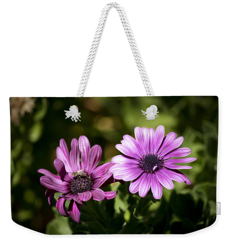 Flower Weekender Tote Bag featuring the photograph Double Purple African Daisy by Teresa Mucha