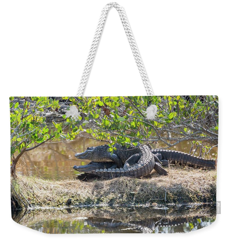 Alligators Weekender Tote Bag featuring the photograph Double Trouble by Dorothy Pierini-Rodgers