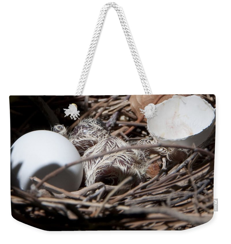 Nest Weekender Tote Bag featuring the photograph Dove Hatchling by Steven Natanson