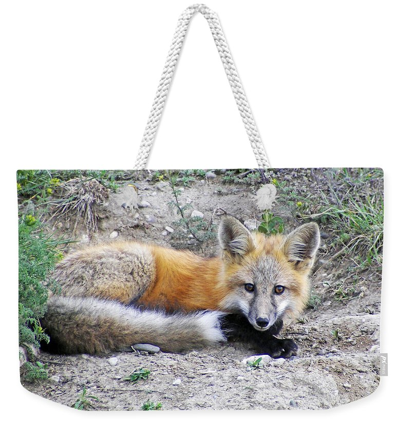 Fox Weekender Tote Bag featuring the photograph Down And Out by Brad Christensen