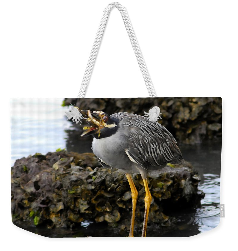 Yellow Crowned Night Heron Weekender Tote Bag featuring the photograph Down The Hatch by David Lee Thompson