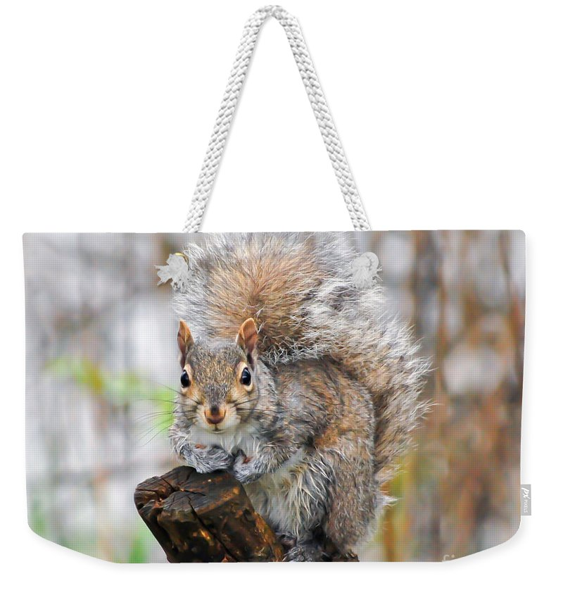 Squirrel Weekender Tote Bag featuring the photograph Downright Adorable by Kerri Farley