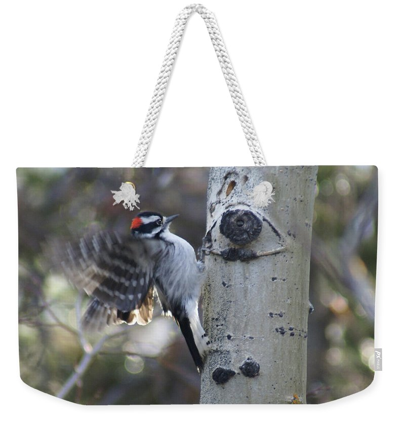 Woodpecker Weekender Tote Bag featuring the photograph Downy Woodpecker by Heather Coen