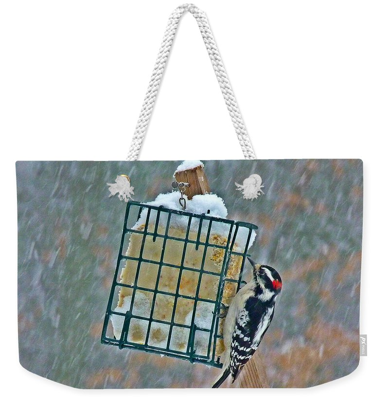 Nature Weekender Tote Bag featuring the photograph Downy Woodpecker In The Snow by Dirk Fecho