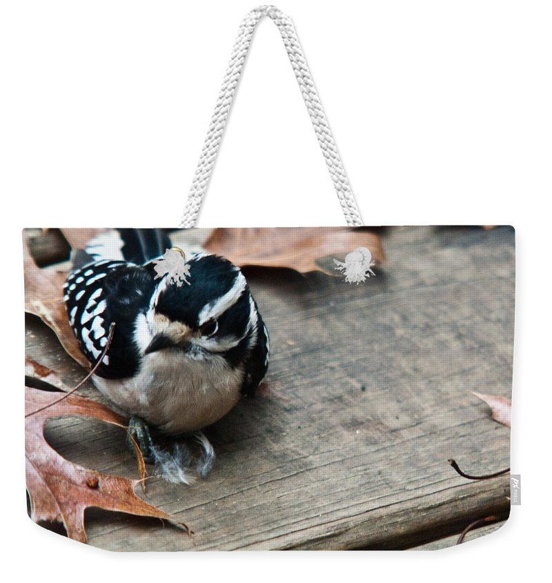 Cove Weekender Tote Bag featuring the photograph Downy Wooodpecker Picoides Pubscens by Douglas Barnett
