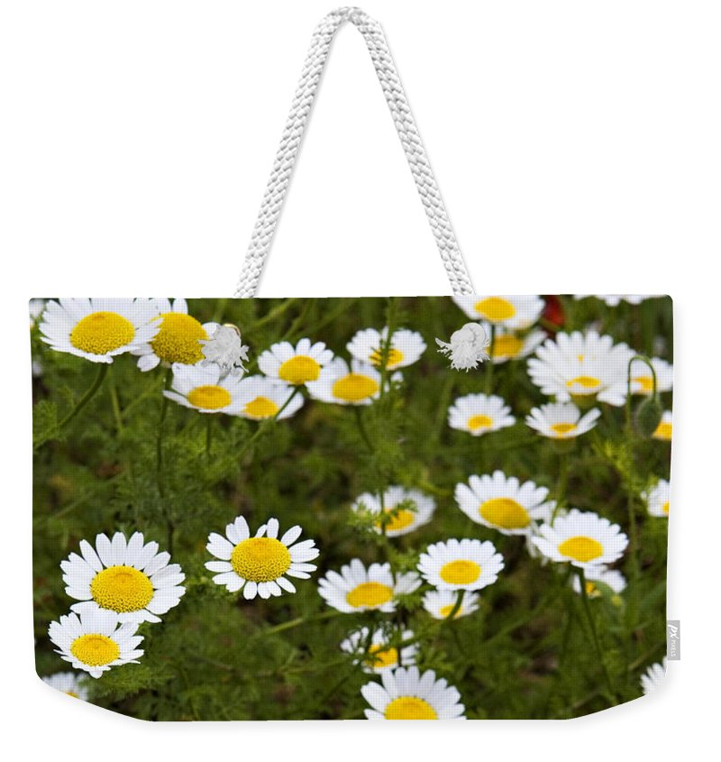 Daisy Weekender Tote Bag featuring the photograph Dozens Of Daisies by Marilyn Hunt