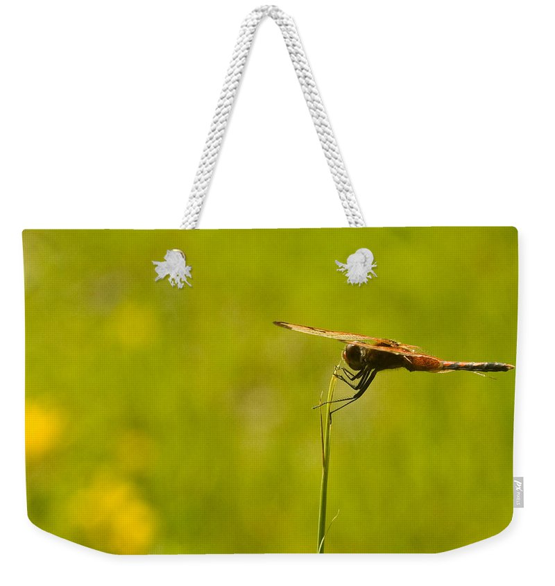 Snake Weekender Tote Bag featuring the photograph Dragon Fly Poising by Douglas Barnett