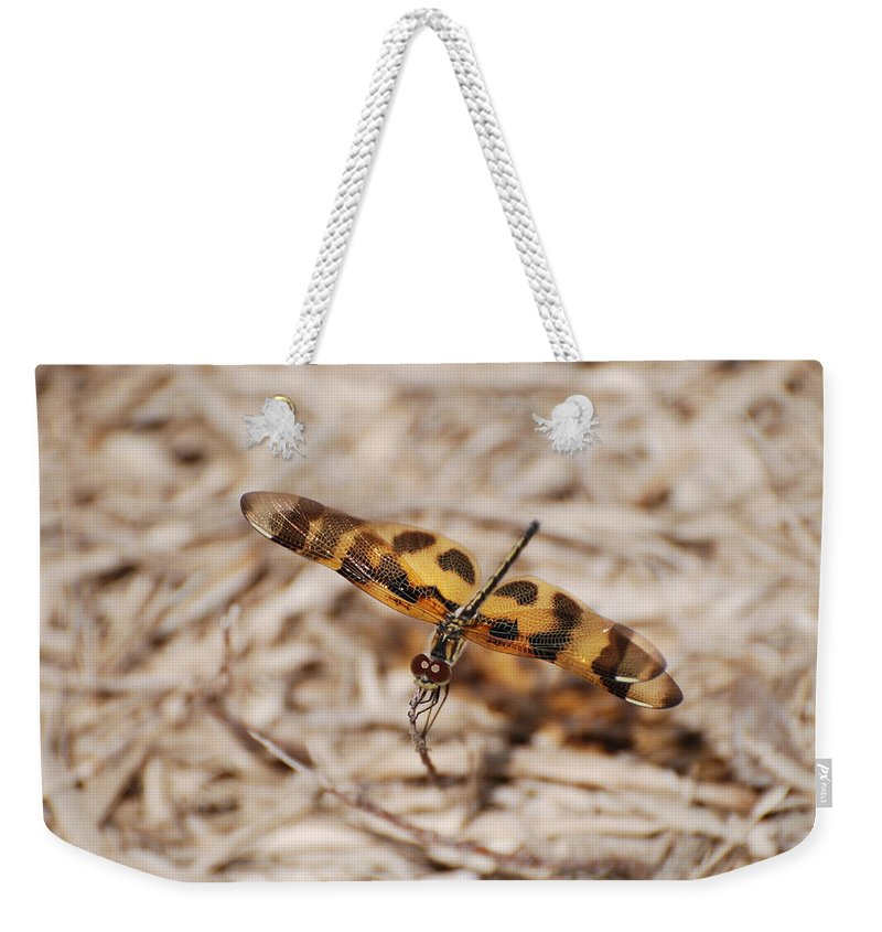 Nature Weekender Tote Bag featuring the photograph Dragon Fly by Rob Hans