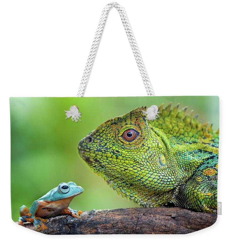 Dragon Weekender Tote Bag featuring the photograph Dragon Forest And Frog by Riza Arif Pratama