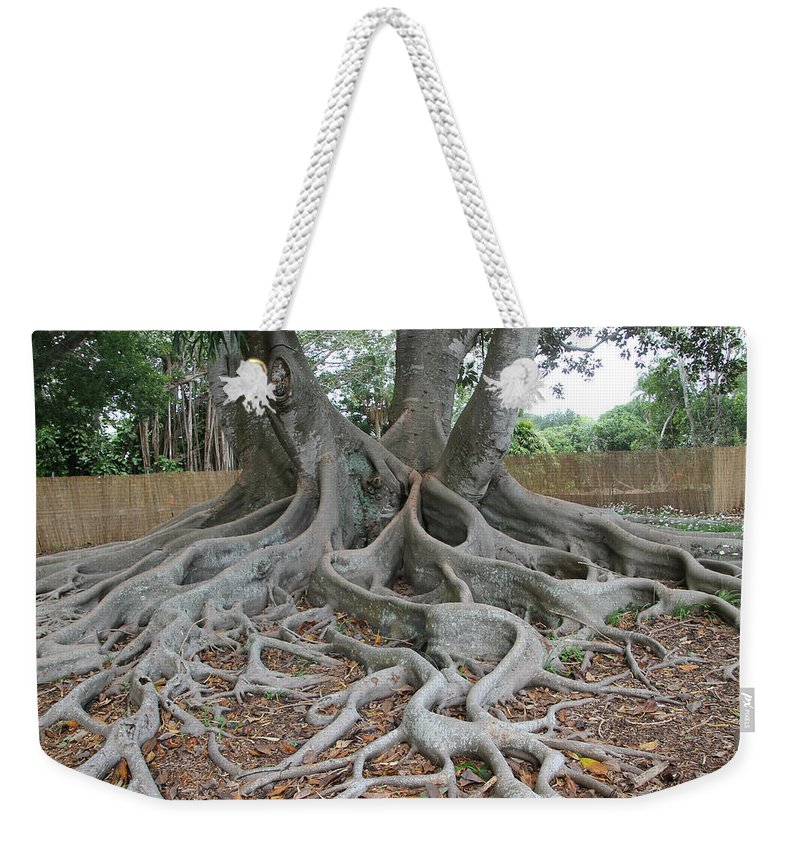 Tree Weekender Tote Bag featuring the photograph Dragonfeet by Laura Martin