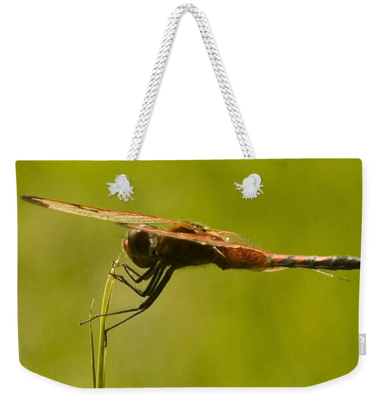 Dragonfly Weekender Tote Bag featuring the photograph Dragonfly Holding On Tight by Douglas Barnett