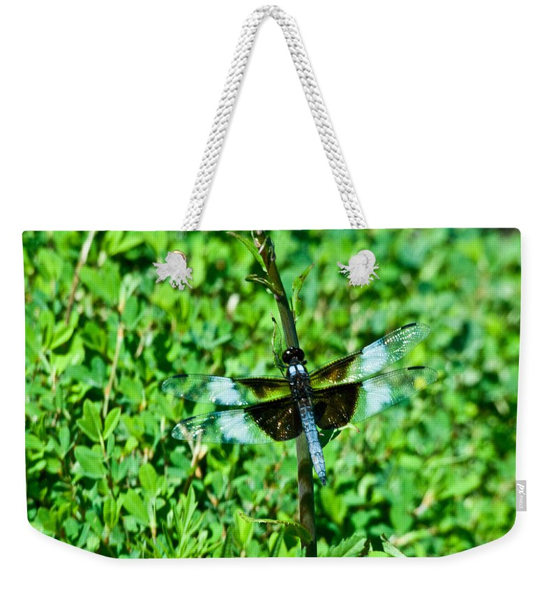 Dragonfly Weekender Tote Bag featuring the photograph Dragonfly Resting On Stem by Douglas Barnett