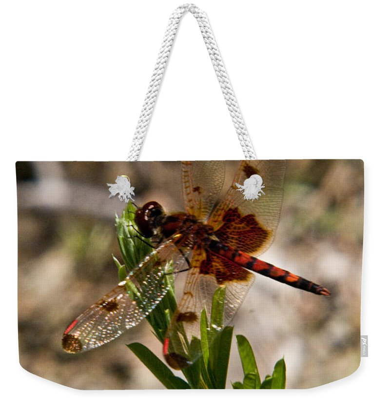Odonata Weekender Tote Bag featuring the photograph Dragonfly Resting On The Green by Douglas Barnett