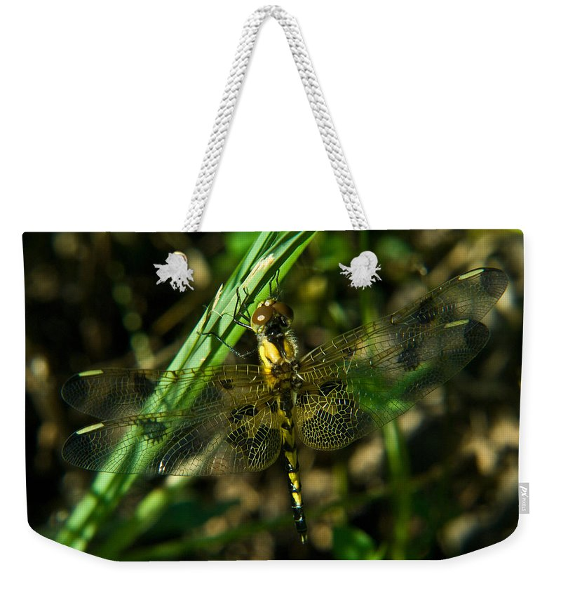 Dragonfly Weekender Tote Bag featuring the photograph Dragonfly Venation Revealed by Douglas Barnett