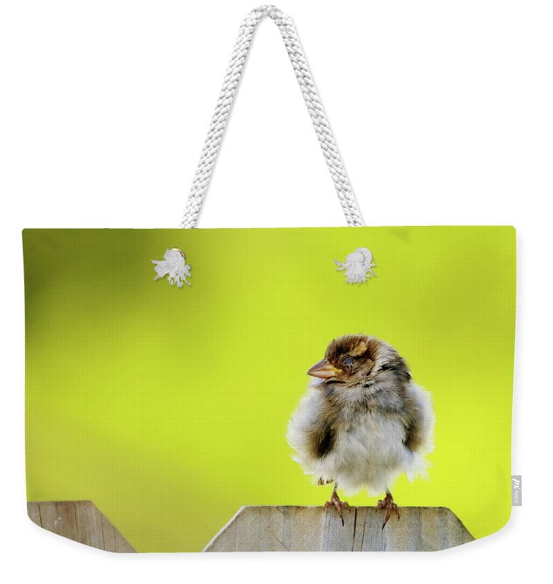 Sparrow Weekender Tote Bag featuring the photograph Dream Sparrow by Betty LaRue