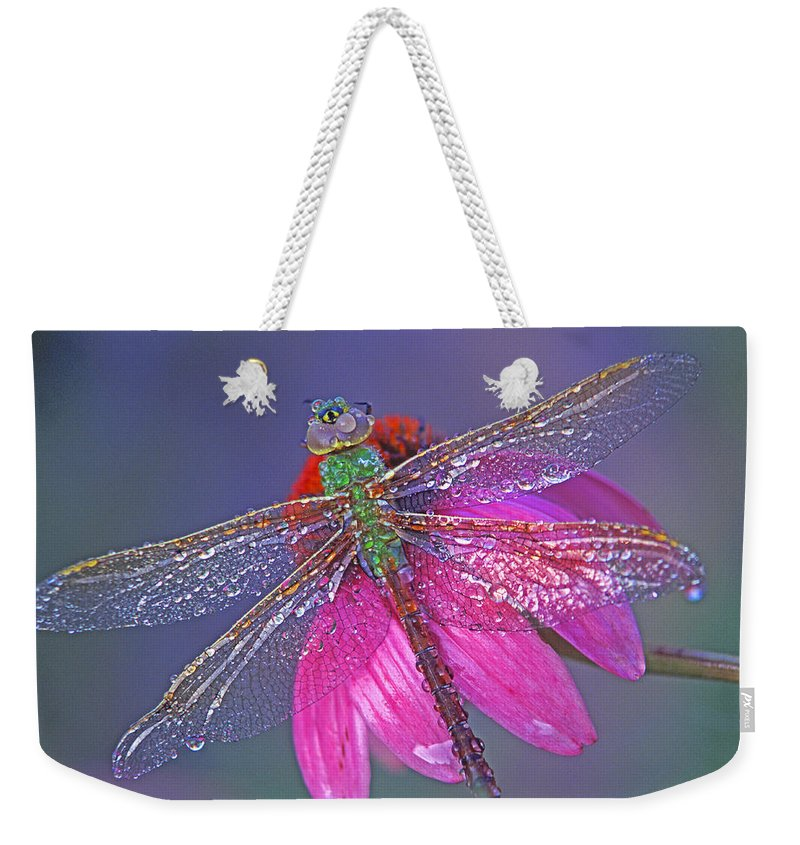 Dew Covered Dragonfly Rests On Purple Cone Flower Weekender Tote Bag featuring the photograph Dreaming Dragon by Bill Morgenstern