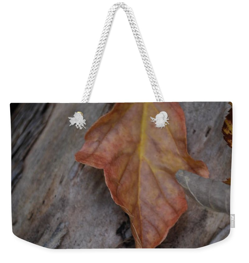 Fall Weekender Tote Bag featuring the photograph Dried Leaf On Log by Heather Kirk
